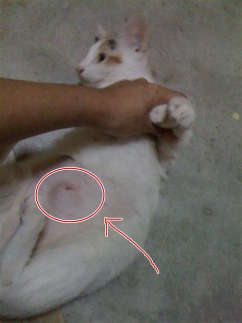 spaying a complications after spaying noraini suriya mohd arshad s