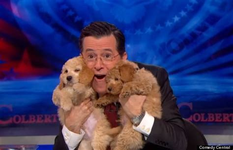 stephen colbert puppies stephen colbert makes valiant effort to compete with gma in november sweeps huffpost