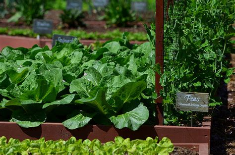 white house vegetable garden will bulldoze the white house vegetable garden