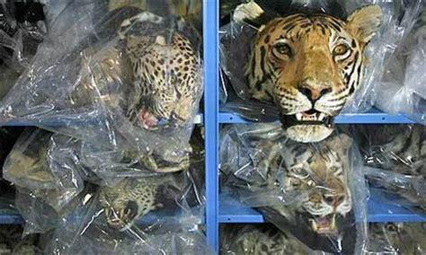 Kartu Telepon Indonesia Wwf World Wildlife Fund illegal wildlife trade threatens nations security naharnet