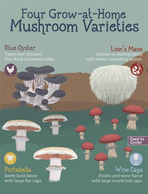 growing mushrooms at home fix