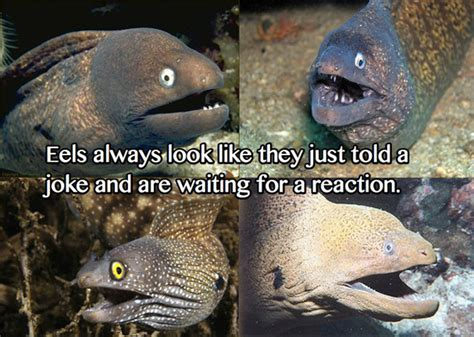 Eel Meme - jimmyfungus com bad joke eel the very best of the bad