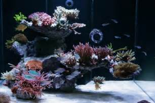 72 gallon bow front sps reef