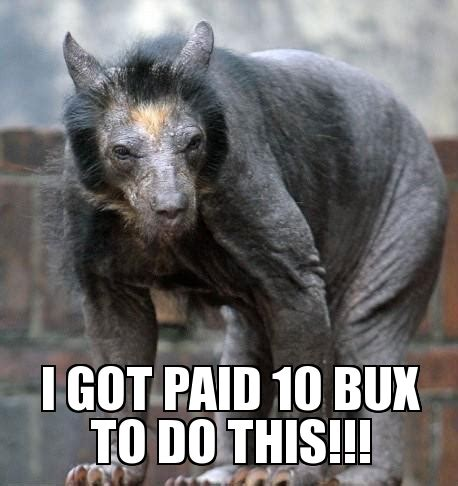 shaved bear weknowmemes generator