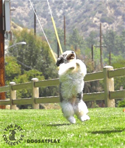 dogs at play dogs at play gifs wifflegif