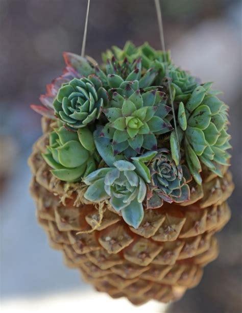 cute succulents diy hanging pine cone succulent planter 35 pine cone