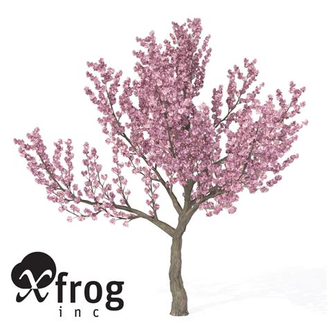 cherry blossom tree 3d model free kanzan cherry tree blossoms 3d model