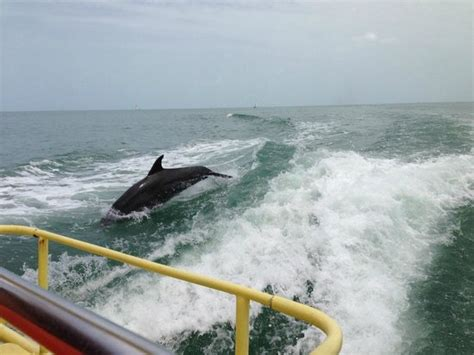 screamer boat the dolphins surf in the sea screamer wake right behind