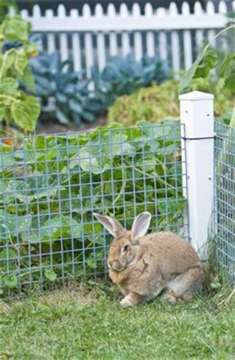 Keeping Rabbits Out Of Garden by Rabbit Gardens And Vegetable Garden On