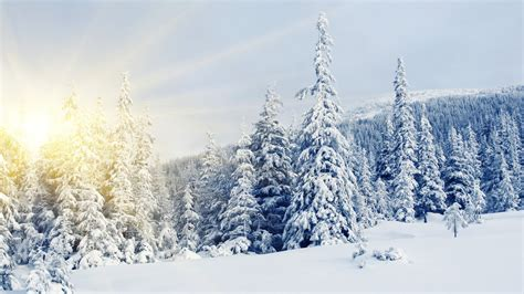 tree in snow wallpaper winter snow covered trees wallpapers and images