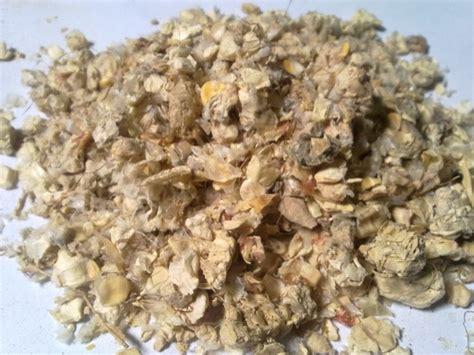 Pakan Ternak Tongkol Jagung cara cerdas mengubah tongkol jagung agar bernilai komersil
