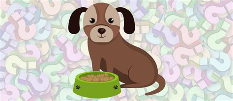 can shih tzu eat corn food 101 breaking grains and gluten free diets