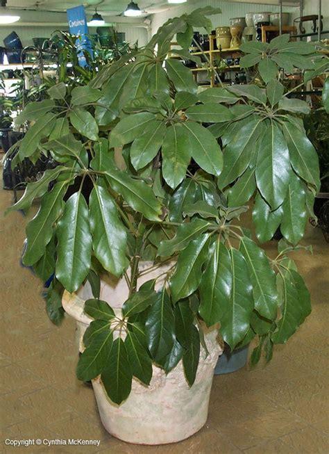 outstanding interior plants