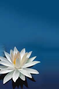 Wallpaper Lotus Flower Design Freeios7 Lotus Flower Parallax Hd Iphone Wallpaper
