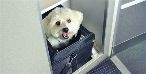 Delta Pets In Cabin by Les 8 Meilleures Compagnies A 233 Riennes Pour Voyager Avec