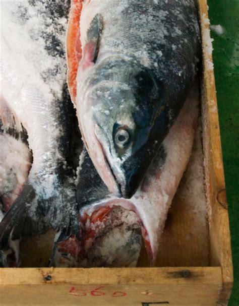 come cucinare il salmone fresco a tranci come cucinare il salmone 10 ricette e 10 consigli
