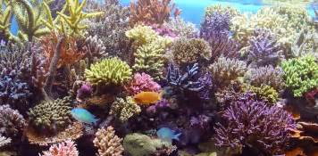 salt water tank is cool for your house interesting info