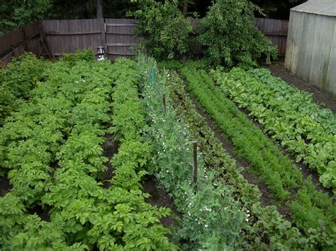 inspiring backyard vegetable garden with various plants
