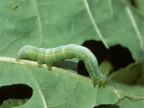types of garden worms types of garden pests bugs that destroy plants hgtv