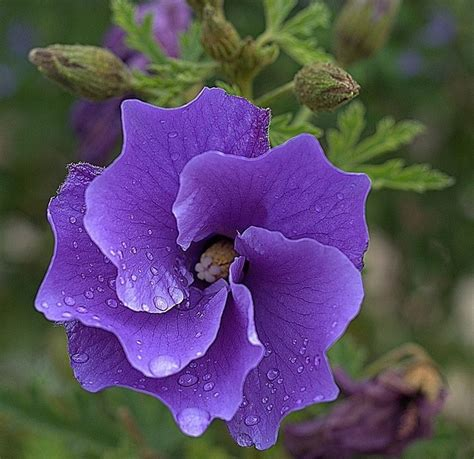 different types of purple 34 different types of purple flowers for your garden purple flowers meaning