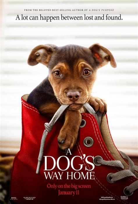 508763 a dog s way home a dog s way home trailer tries to be this generation s