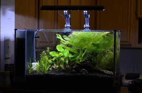 Fluval Spec Aquascape by Fluval Spec V Idea Aquascaping Aquarium Ideas