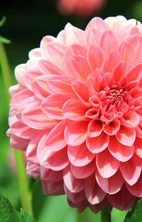 Pupuk Perangsang Bunga Yang Bagus gambar bunga bunga indah dan mengagumkan tips dan inspirasi