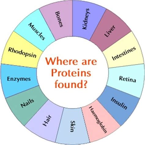 protein x wockhardt wockhardt nutrition your proteins proteins plant