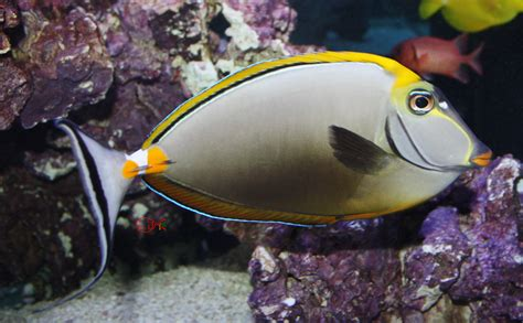 fish for sale absolutely fish marine fish for sale tangs