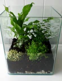 Easy Gravel Patio How To Make A Terrarium With A Nano Aquarium My Jungle