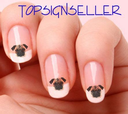 cutting pugs nails 1518 best images about pugssss on teacup pug pug meme and pug