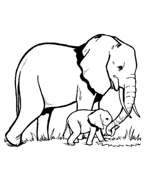Coloring Pages Elephant elephant coloring pages to print coloring home
