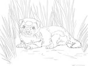 Ferret Coloring Pages Getcoloringpagescom Sketch Coloring Page Ferret Coloring Pages