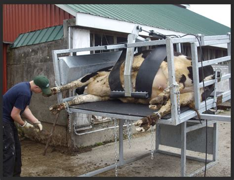 Pin Dairy Cow Anatomy Image Search Results On Pinterest