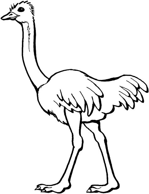 clipart black and white black and white clipart ostrich clipground