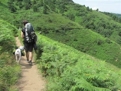 camino trail hiking the camino de santiago with ruffwear