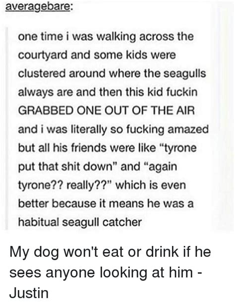 my puppy wont eat or drink 25 best memes about seagull seagull memes
