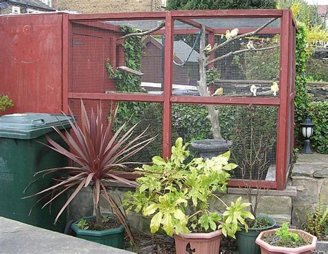 backyard aviary building an outdoor bird aviary what you need to consider