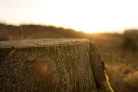 arbre 233 le tronc t 233 l 233 charger des photos gratuitement