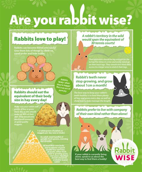 whats included in 96u rabbit advice rabbit health information vets4pets