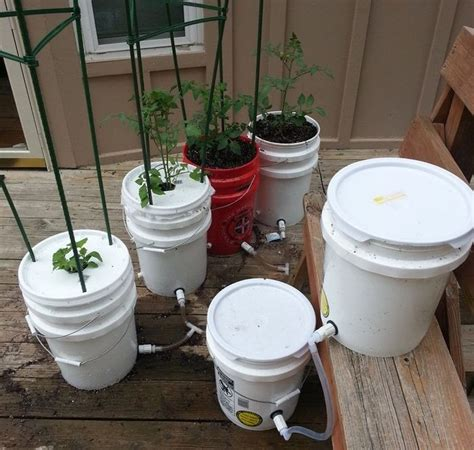 gallon  watering tomato container diy projects