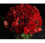 Rose Rouge  IDYLLE Fleuriste