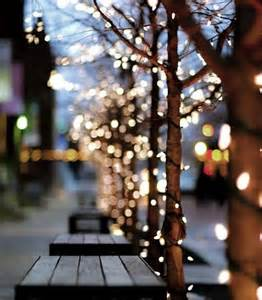 trees twinkle lights pinterest