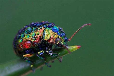 colorful bugs colorful bug photography beautiful creatures