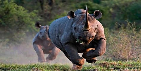 top 25 most dangerous animals in the world pouted online 17 best images about dangerous creatures on pinterest
