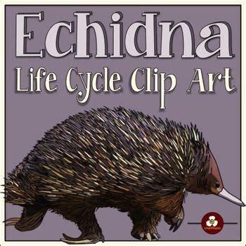 echidna clipart echidna cycle clip biology