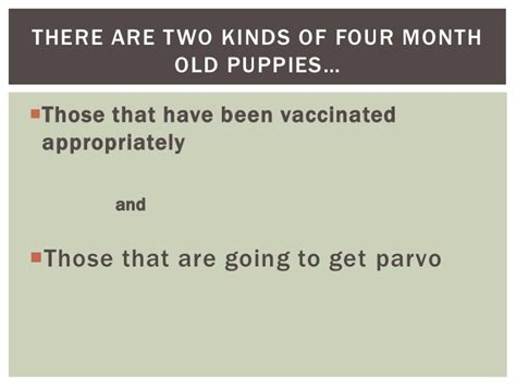 4 month puppy has diarrhea my puppy has parvo now what