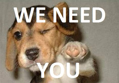 what do i need for a new puppy help do you the areas of south east wfyouth