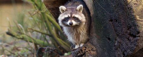imagenes de animales orando la fauna el oeste de estados unidos estados unidos