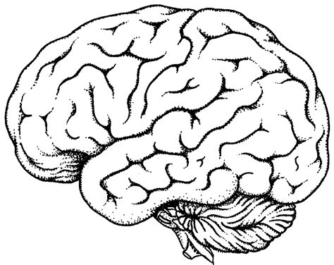 Brain Coloring Page Brain Line Drawing Clipart Best by Brain Coloring Page